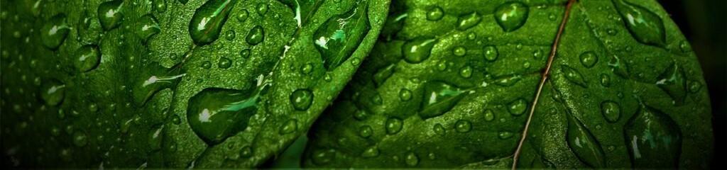 nawodnione-rośliny